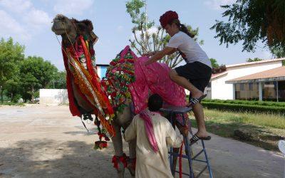 Rok v Indii
