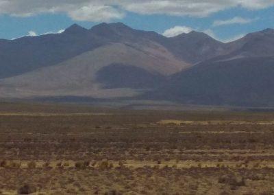 Alpaky uprostřed ničeho