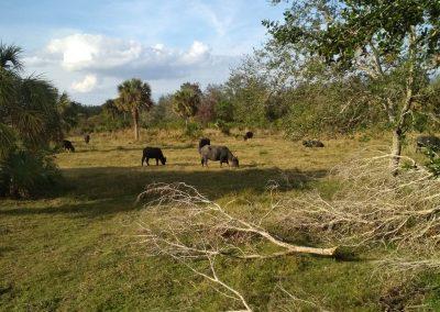 Krajina Floridy