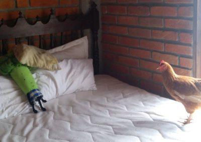 Nečakaná návšteva zo záhrady v mojej posteli