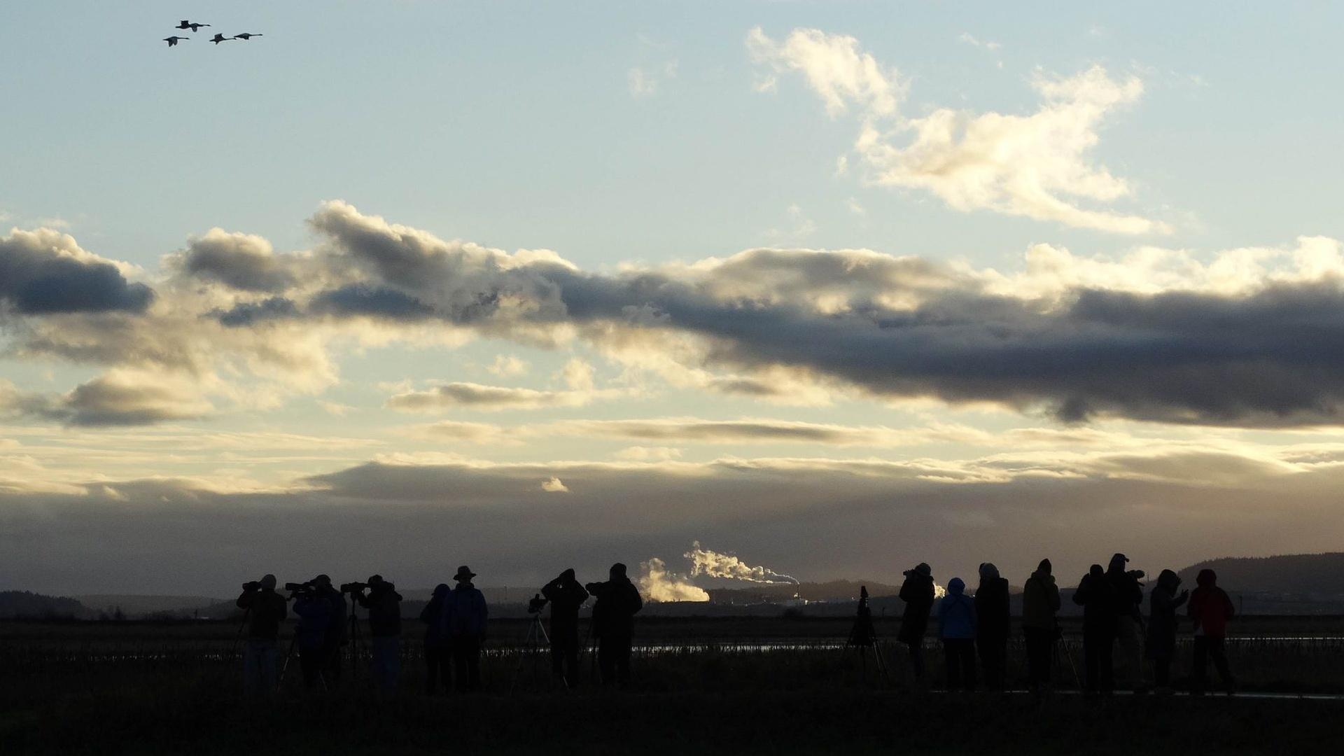 Pozorování ptáků při západu slunce s ABC Birding Club v nádherném Skagit County