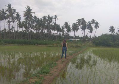 V rýžovém poli