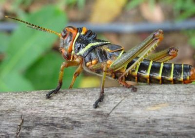 sposty-a-spousty-hmyzu