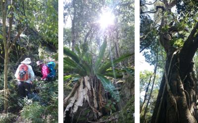Australská buš: les nebo džungle?